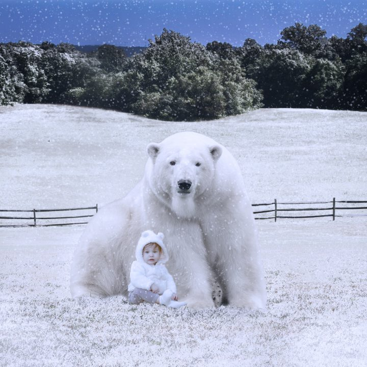 Beary chilly, a composite challenge
